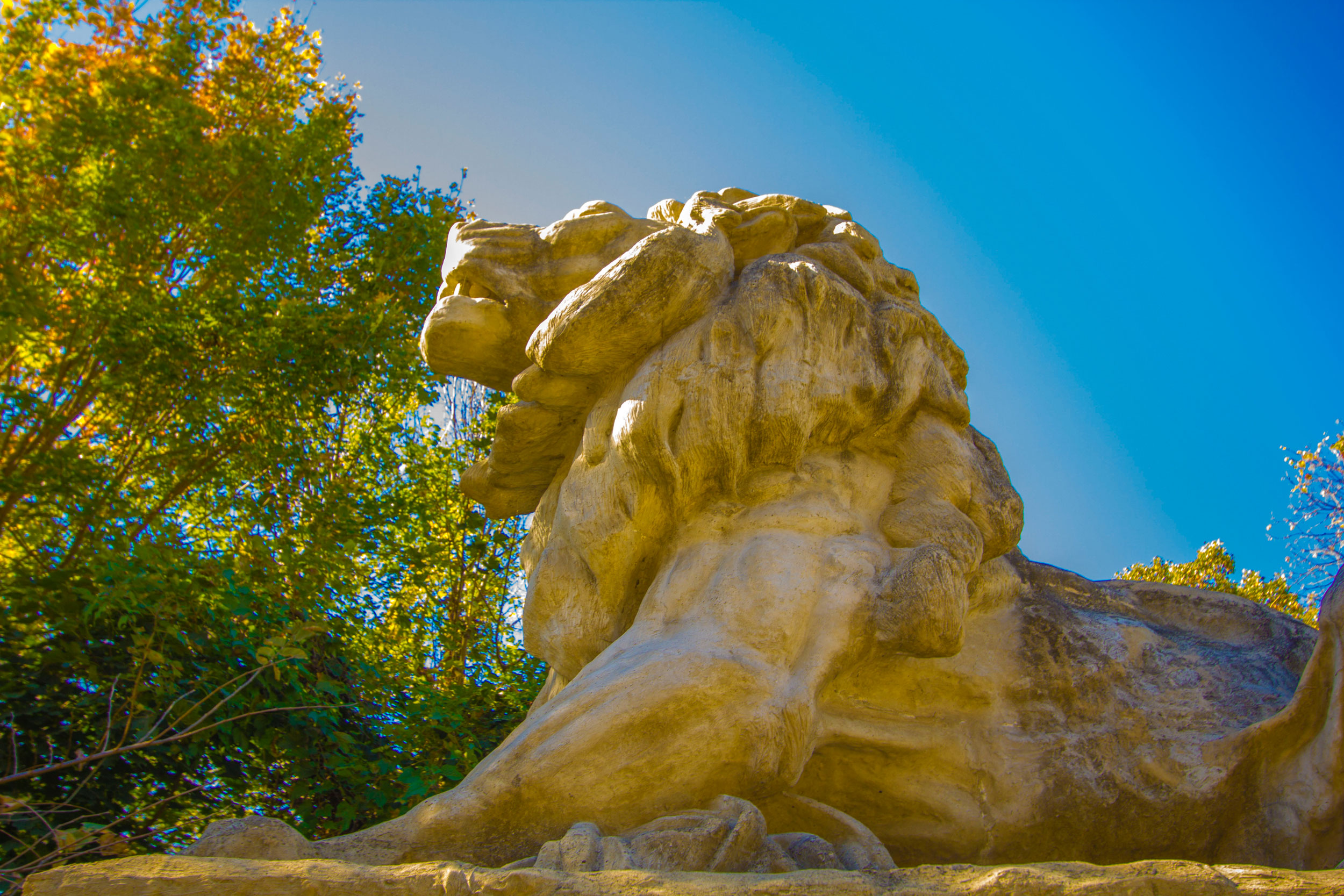 Kalorama lion